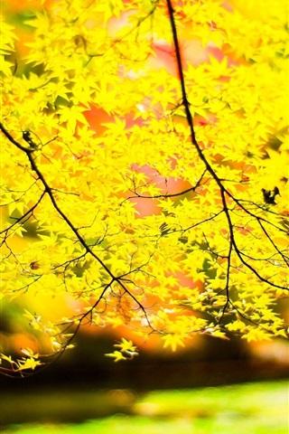 iPhone Wallpaper Yellow leaves, twigs, sun, blur