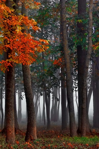 iPhone Wallpaper Forest, fog, autumn, trees