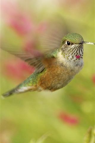 iPhone Wallpaper Hummingbirds, bird close-up, in flight, red flowers
