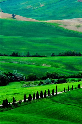 iPhone Wallpaper Italy, Tuscany, spring scenery, fields, road, trees, green