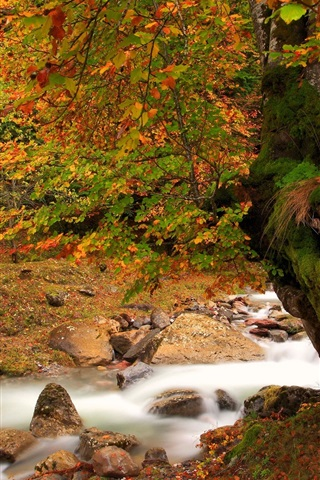 iPhone Wallpaper Nature autumn landscape, river, tree, moss, red leaves