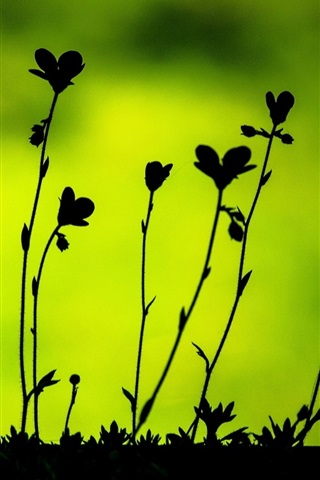 iPhone Wallpaper Plants leaves macro, black silhouettes, green background