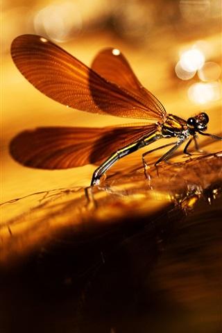 iPhone Wallpaper Summer, dragonfly, warm sun