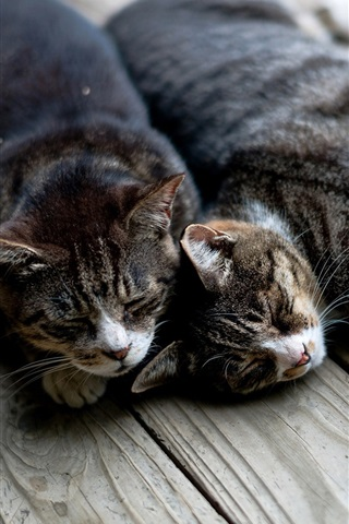iPhone Wallpaper Two cats sleep at wooden board