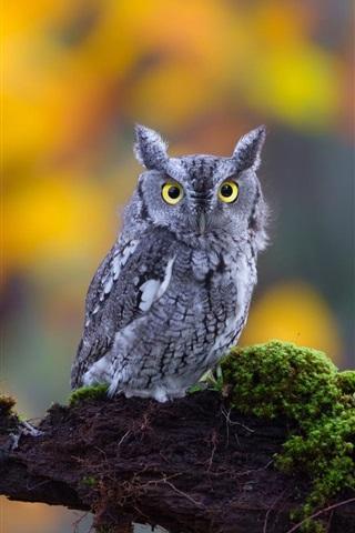 iPhone Wallpaper Cute little owl, moss, nature