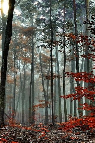 iPhone Wallpaper Forest, trees, autumn, fog, morning