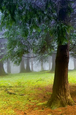 iPhone Wallpaper Nature scenery, forest, trees, morning, mist, fog