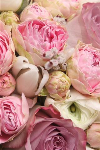 iPhone Wallpaper Pink flowers, beautiful rose, romance