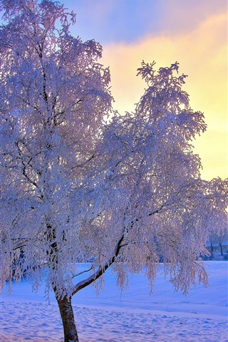 iPhone Wallpaper Winter snow trees, frost, sky, sun, mist