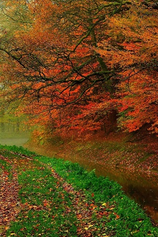 iPhone Wallpaper Autumn leaves, trees, forest, autumn, walk path, river