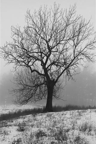 iPhone Wallpaper England winter, nature snow, tree, fog