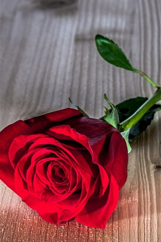 iPhone Wallpaper Red rose flower, wooden table