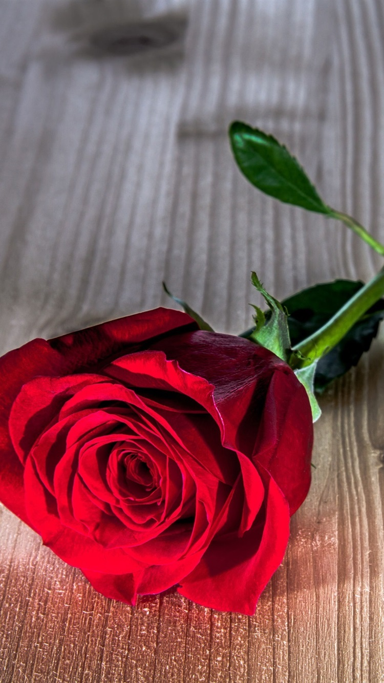 Red Rose Flower Wooden Table 750x1334 Iphone 8766s Wallpaper