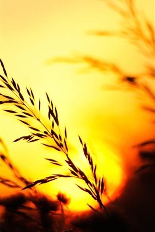 iPhone Wallpaper Sunset, grass, evening