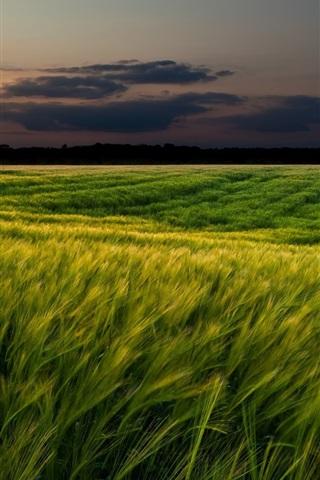 iPhone Wallpaper Sunset landscapes, nature, wheat fields, dusk