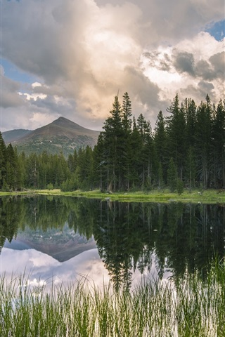 iPhone Wallpaper USA, California, mountains, forest, lake, reflection