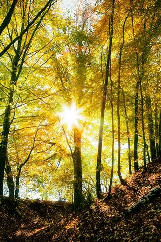 iPhone Wallpaper Autumn forest, trees, light, sun rays