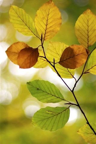iPhone Wallpaper Autumn, leaves, blur, bokeh