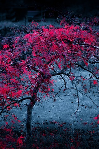 iPhone Wallpaper Autumn lonely tree, red leaves, dusk