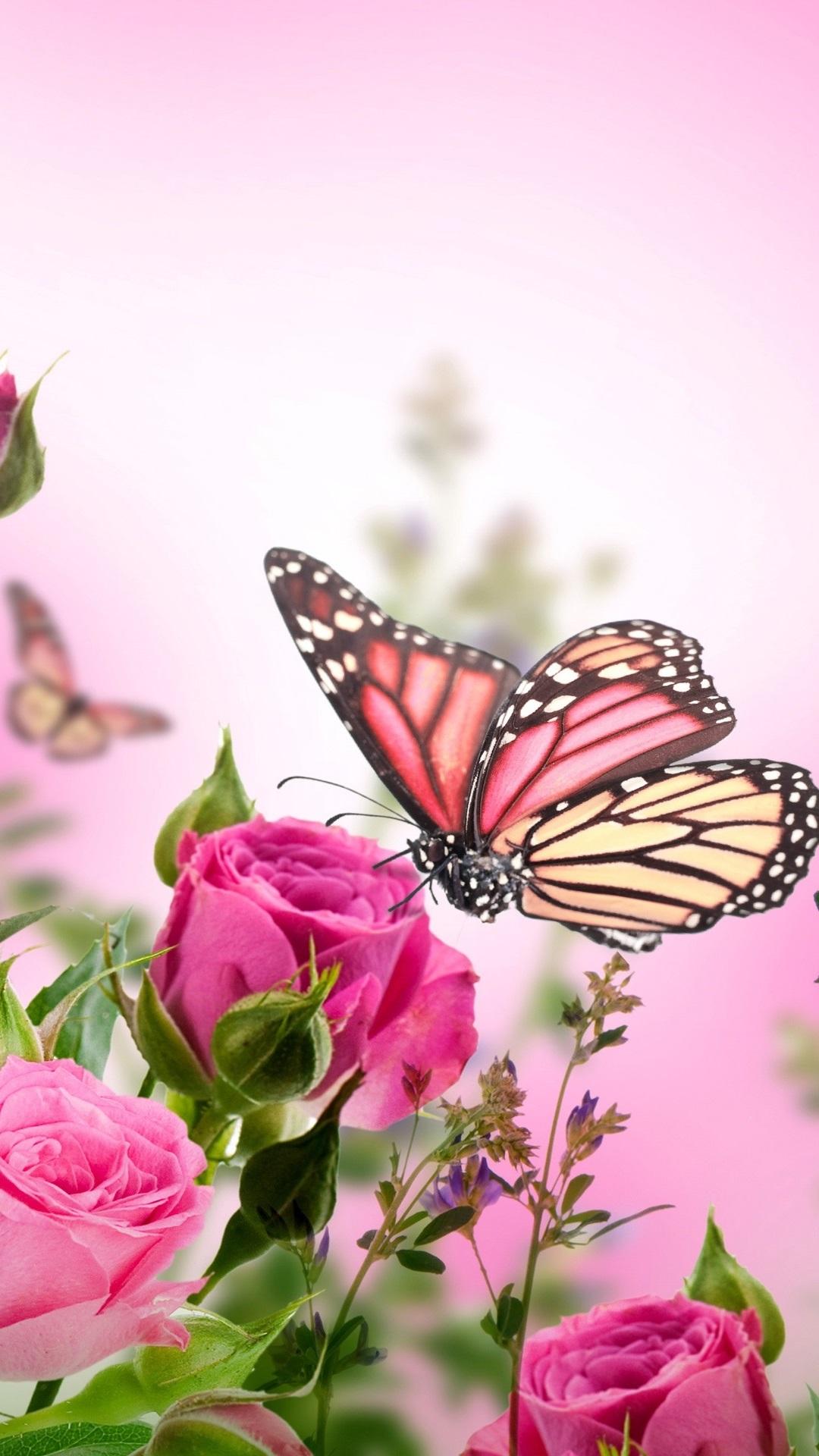 壁紙 ピンクのバラ、花、蝶 2560x1920 HD 無料のデスクトップの背景, 画像 Wallpapers Of Butterflies