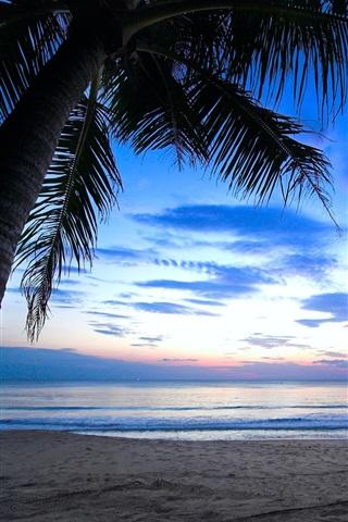 iPhone Wallpaper Tropical, palm tree, cloudy sky, Caribbean, sea, beach, dawn, sunlight