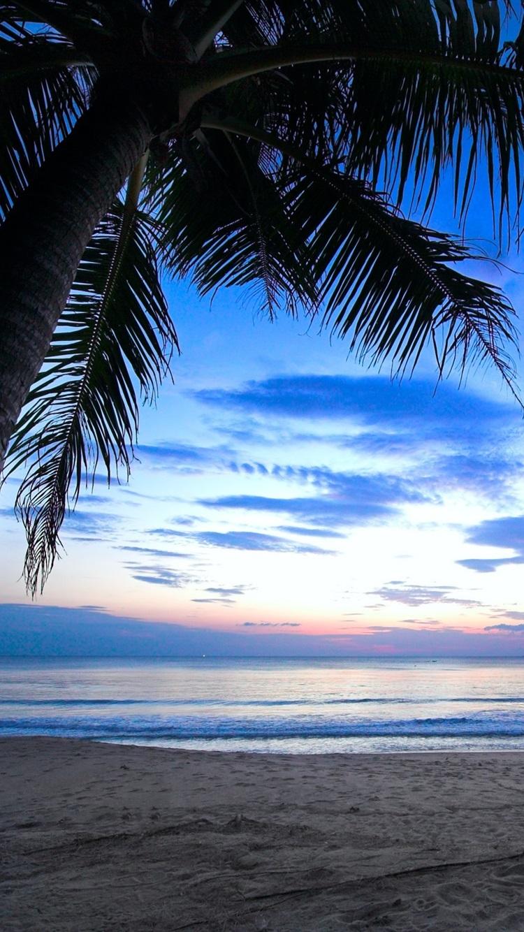 トロピカル ヤシの木 曇り空 カリブ海 海 海岸 夜明け 日光 750x1334 Iphone 8 7 6 6s 壁紙 背景 画像