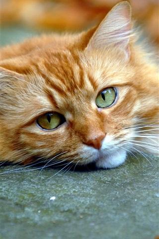 iPhone Wallpaper Cute cat, face, eyes, fall