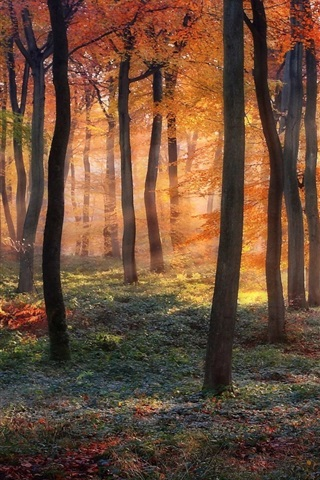 iPhone Wallpaper Forest, trees, autumn colors, sun rays