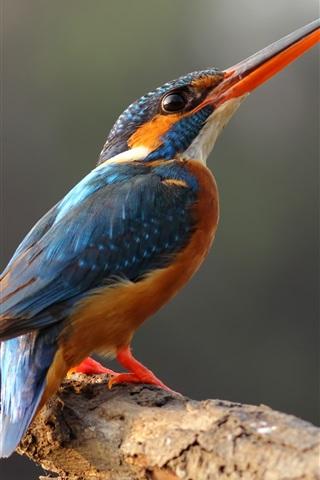 iPhone Wallpaper Lonely kingfisher, long beak