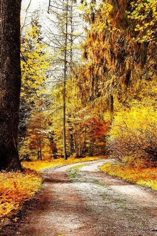 iPhone Wallpaper Park autumn nature, trees, yellow leaves, road, bench, frost