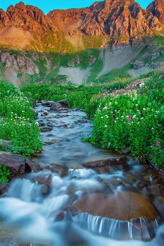 iPhone Wallpaper USA, Silverton, Colorado, morning, mountains, summer, stream, rocks, flowers