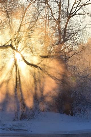 iPhone Wallpaper Winter, morning, sunrise, sun rays, fog, trees, snow