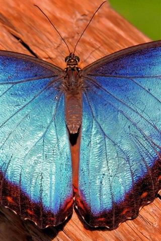 iPhone Wallpaper Blue butterfly, wood
