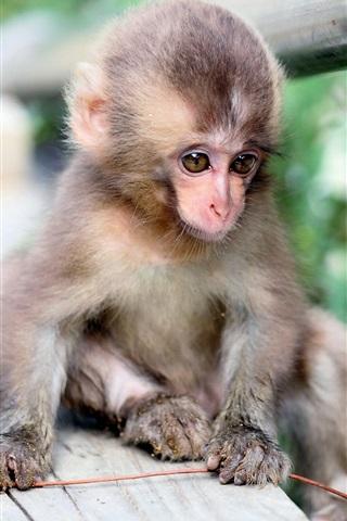 iPhone Wallpaper Little monkey, nature, bokeh