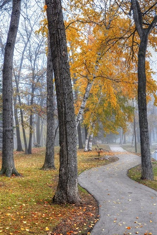 iPhone Wallpaper Park landscape, walkway, trees, benches, lake, autumn