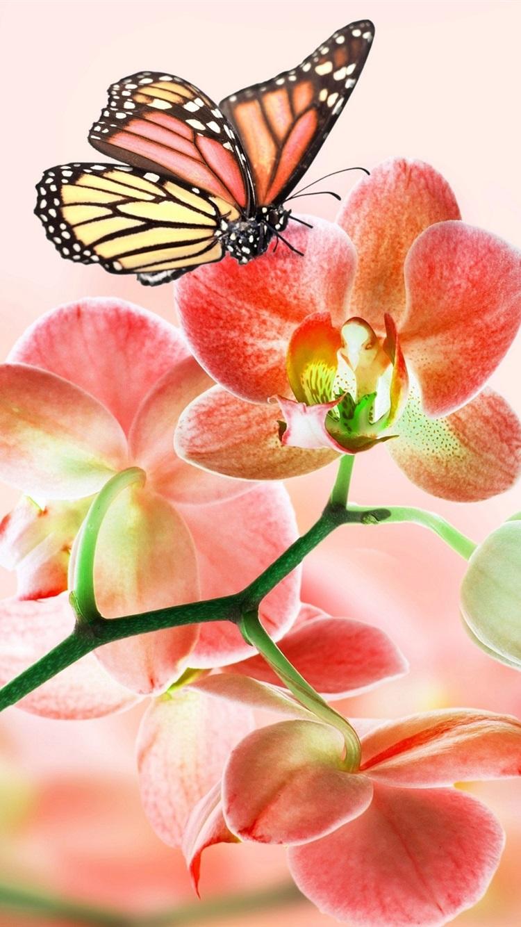 Rote Blumen Orchideen Schmetterlinge 2560x1600 Hd