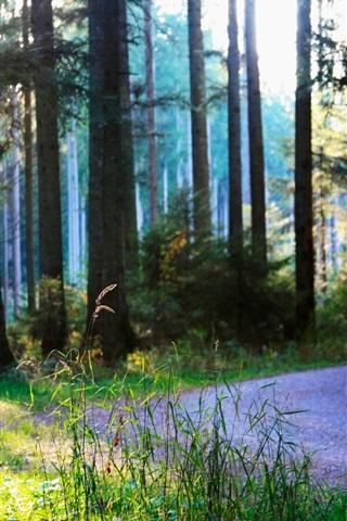 iPhone Wallpaper Summer, forest, road, sunshine