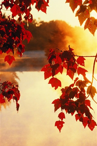 iPhone Wallpaper Autumn, trees, leaves, sunlight rays, beautiful scenery