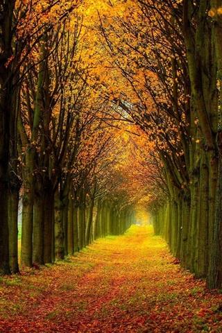 壁纸 美丽的自然风光,森林,树木,秋天,路径 1920x1200 HD 高清壁纸, 图片, 照片