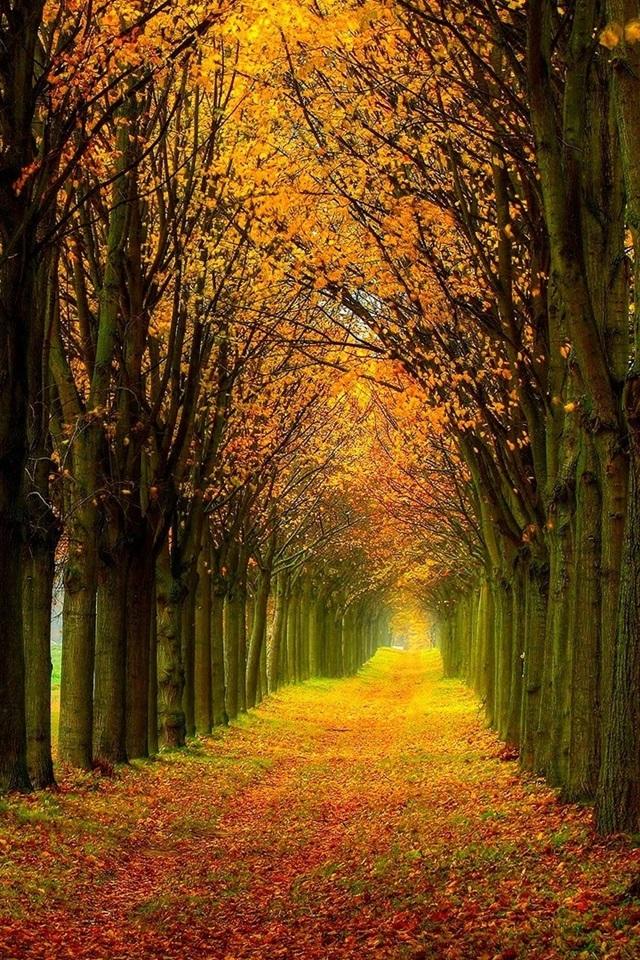 壁纸 美丽的自然风光,森林,树木,秋天,路径 1920x1200 Hd 高清壁纸 图片 照片