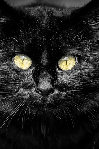 iPhone Wallpaper Black cat, yellow eyes, black background