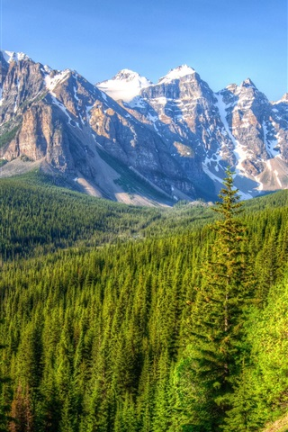 iPhone Wallpaper Canada, mountains, trees, forest, blue sky, Banff Park