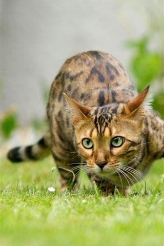 iPhone Wallpaper Cat sneak in grass