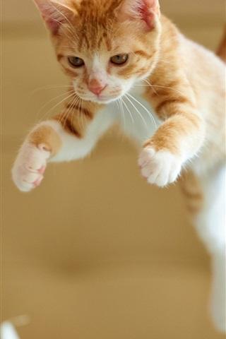 iPhone Wallpaper Kitten jumping