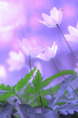 iPhone Wallpaper Morning flowers, leaves, bokeh