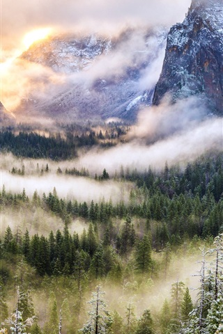 iPhone Wallpaper Morning, mountains, fog, forest, nature landscape