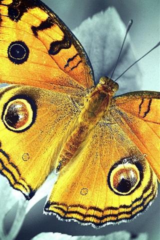 iPhone Wallpaper Orange butterfly, leaves, bokeh