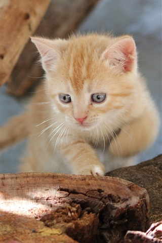 iPhone Wallpaper Tree stump, kitten