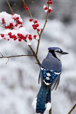iPhone Wallpaper Winter, blue bird, snow, twigs, red berries