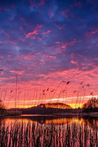 iPhone Wallpaper Beautiful evening, lake, village, reeds, trees, sunset, water reflection